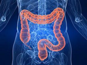intestino-4