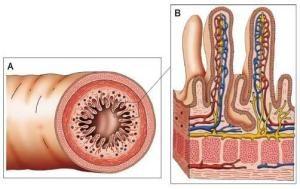 vilosidadesintestinais